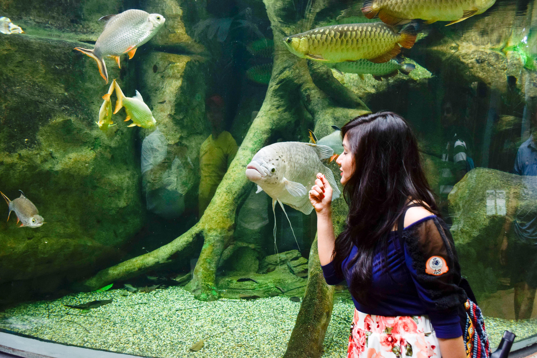 Piture of underwater aquarium langkawi