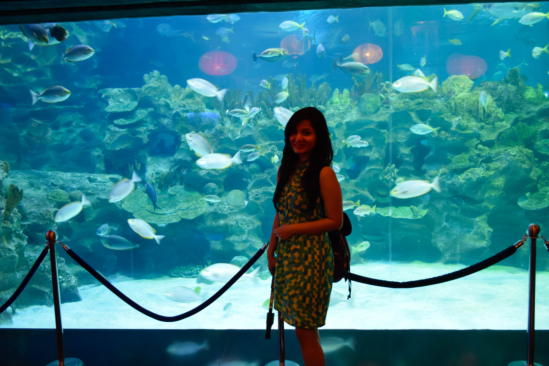 Picture of KLCC Aquaria